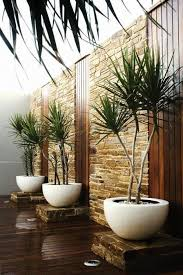 garden trends woody plants in containers backyard plants and nice