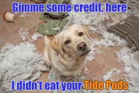 Bad Dog Meme - bad dog memes imgflip