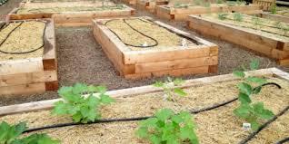 Cedar Raised Garden Bed Incredible Raised Grow Beds Cedar Raised Bed Gardens