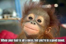Bad Hair Day Meme - pin by erin dunbar on sarcastic cute funny and other pinterest