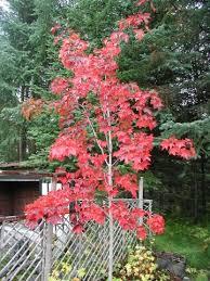 alaska hardy trees and shrubs