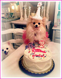 birthday cakes for dogs pictures u2014 wow pictures birthday cakes