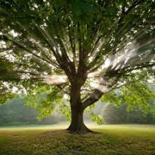 nature and the celtic tree calendar order of bards and druids