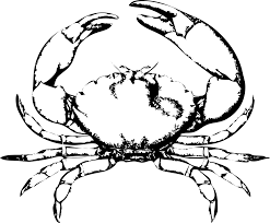 8 images of black and white coloring page crab crab outline clip