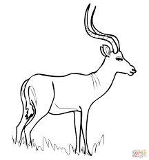 african antelope impala coloring page free printable coloring pages