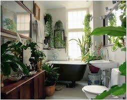 learn about the most common house plants