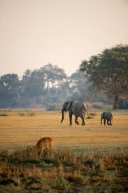 41 best tanzania images on pinterest tanzania lodges and africa