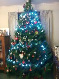 real christmas trees fresh and trimmed to perfection