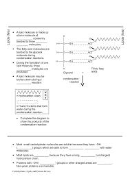 worksheet review carbs lipids proteins