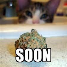 Soon Meme - soon cat weed meme weed memes
