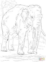asiatic elephant coloring page free printable coloring pages