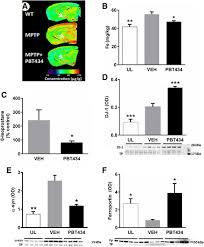 The novel pound PBT434 prevents iron mediated neurodegeneration