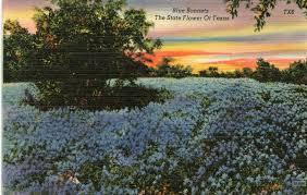 texas postcard eddie rare u0026 unique postcards at affordable prices