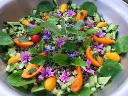 formation cuisine vegetarienne cuisine végétarienne diététique terre et humanisme