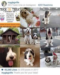 Hipster Dog Meme - hipster dog caption meme generator dog and puppy pictures