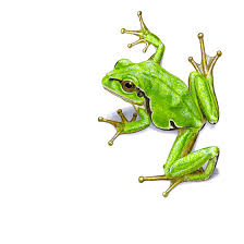 green tree frog greeting card code ha07 on etsy 4 88 frogs