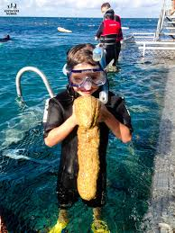 fnq family family friendly things to do in cairns fnq