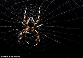 Afraid Of Spiders Meme - the shape of fear why spiders scare us so much humans are