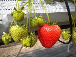 Plants To Grow Indoors 7 Delicious Fruits You Can Grow Indoors This Winter Off The Grid