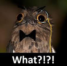 Owl Birthday Meme - unique 90 best potoo memes images on pinterest wallpaper site