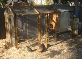 Building Backyard Chicken Coop How To Build A Backyard Chicken Coop Apartment Therapy