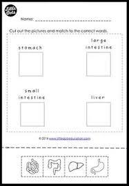 free internal organs worksheet for kindergarten or grade 1 level