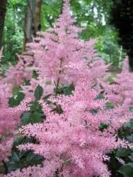 Flower Shrubs For Shaded Areas - 10 great plants for shade gardening plants colorful flowers and