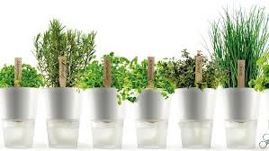 indoor plants health benefits and how to get growing daily