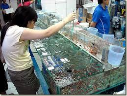 hong kong s ornamental fish aquapress bleher