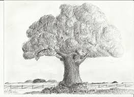 gallery sketch of a tree drawing art gallery