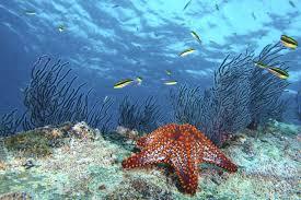imagenes q interesante 6 interesantes datos sobre las estrellas de mar criaturas estelares