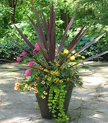 Flower Planter Ideas by Red Cordyline Pink U0026 Yellow Zinnias Creeping Zinnia Creeping