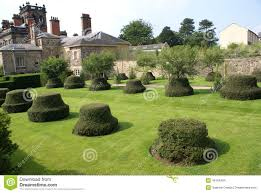 Yew Topiary - garden yew topiary topiary trees stock photo image 46764904