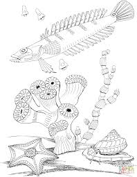 sea snail and sea star coloring page free printable coloring pages