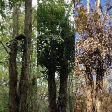 Natural Hunting Blinds Crow U0027s Nest Blind System Q Safe Safety Strap U0026 Hunting Blind