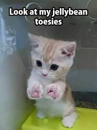 Cute Kittens Meme - 143 best critters images on pinterest cute kittens fluffy kittens