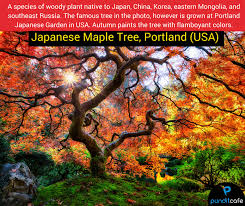 10 most beautiful trees in the world magical nature pundit cafe