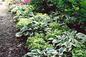 Flower Shrubs For Shaded Areas - choosing shade plants and vine plants garden club