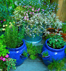 Easy Herbs To Grow Inside by How To Get Sarted Growing Herbs In Pots