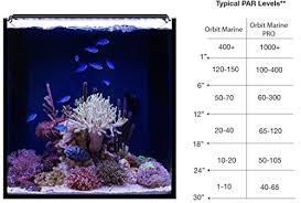 current usa orbit marine aquarium led light current usa orbit marine pro led 24 to 36 saltwater aquarium