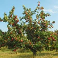 Best Fruit Trees For North Carolina - disease resistant fruit trees for sale from stark bro u0027s