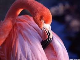 qpanimals pink flamingo