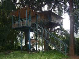 Top 10 Tree Houses Resorts Experience in India  Best Resorts