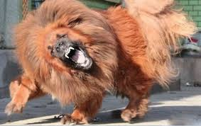 top guard dog breeds style dog breeds puppies top guard dog breeds