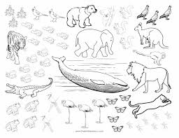 cute baby animals coloring pages of animals color color animals pictures of animals animal