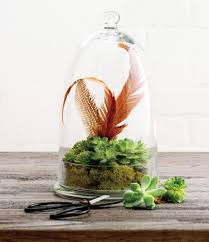 how to make a pretty mini terrarium