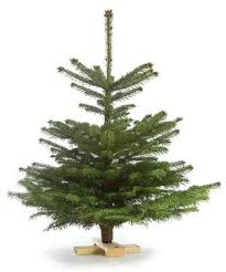 easy tree arbodania