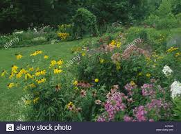 native missouri plants large arbor stock photos u0026 large arbor stock images alamy