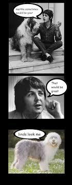 Martha Meme - be your paul mccartney and martha meme by gbms on deviantart