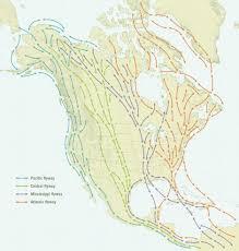 Hummingbird Migration Map Bird Migration Map Directions Maps